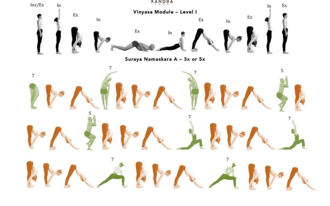 Free Beginner Vinyasa Module